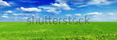 Voorjaar weide mooie blauwe hemel wolken gras Stockfoto © Serg64