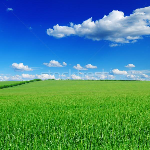Campo blue sky nuvens primavera grama sol Foto stock © Serg64