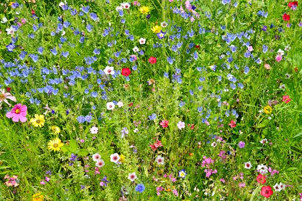 Flores silvestres verde prado grama natureza folha Foto stock © serg64