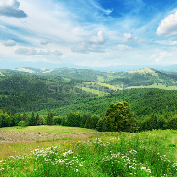 Beautiful mountains Stock photo © serg64