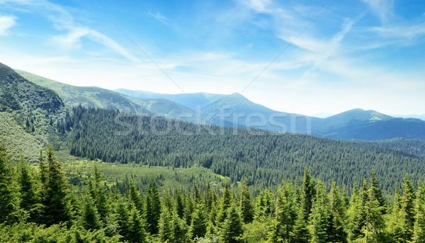 Hegyek fedett fák kék ég égbolt fa Stock fotó © serg64