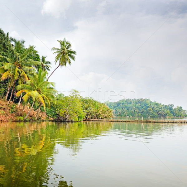 Tropicales jungle lac ciel eau jardin Photo stock © serg64