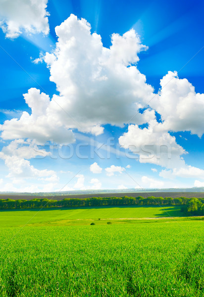 spring field Stock photo © serg64