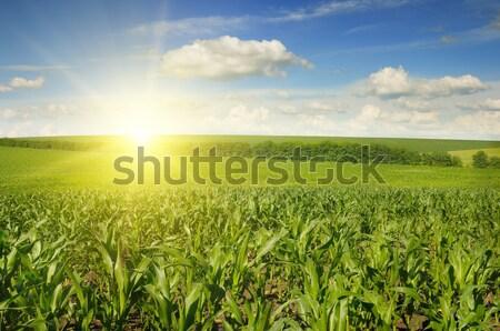 Belo pôr do sol milho campo céu nuvens Foto stock © serg64