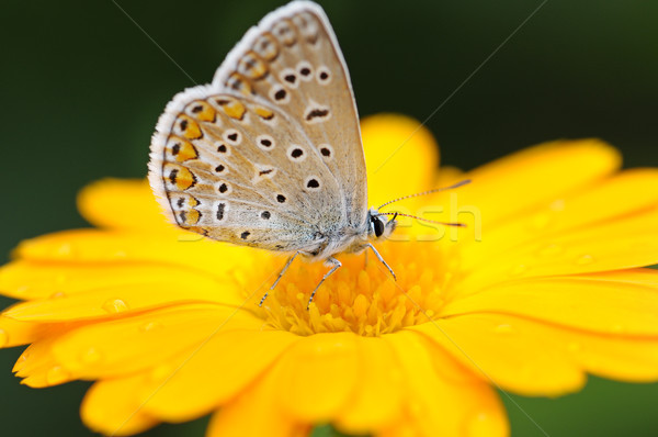 красивой бабочка желтый цветок весны лет оранжевый Сток-фото © serg64