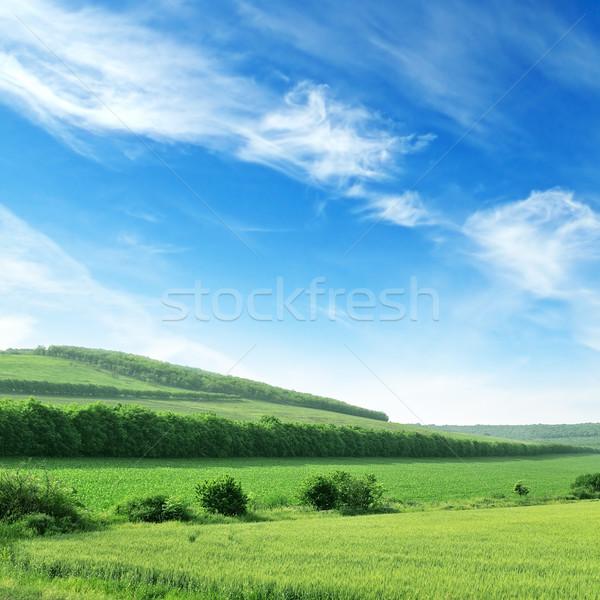 Terreno cielo blu primavera erba legno natura Foto d'archivio © Serg64
