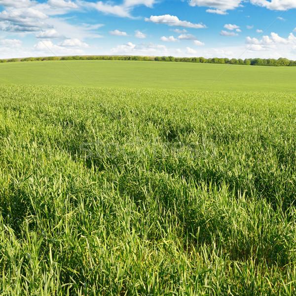meadow and blue sky Stock photo © serg64