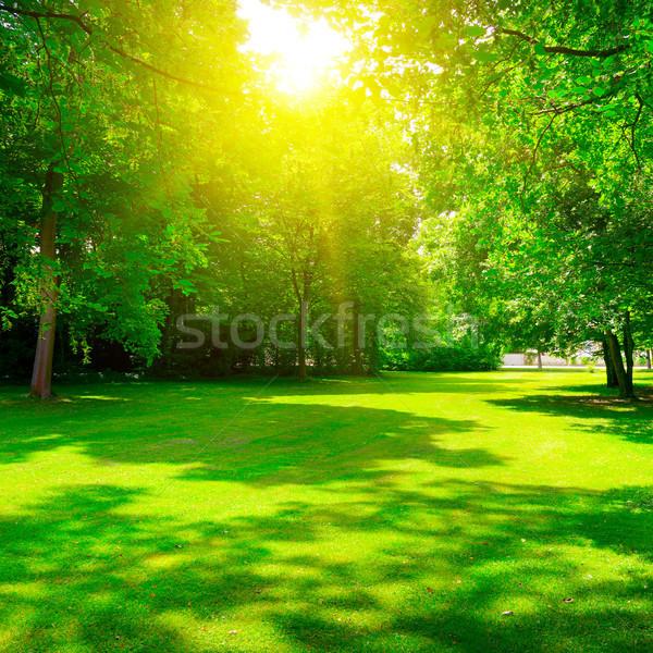 Napfelkelte nyár gyönyörű park fa erdő Stock fotó © serg64