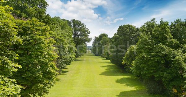 beautiful park and blue sky Stock photo © serg64