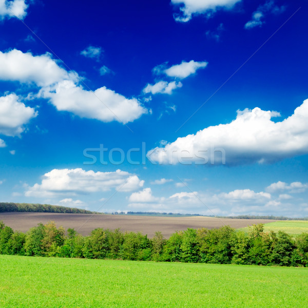 field Stock photo © Serg64
