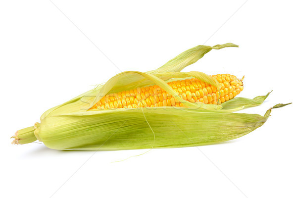 Milho isolado branco folha saúde agricultura Foto stock © serg64
