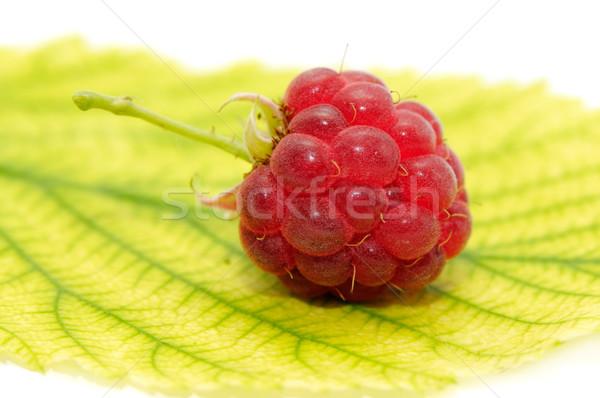 Framboesa folha isolado branco fruto fundo Foto stock © Serg64