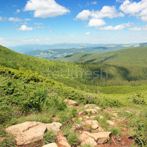 mountains covered trees Stock photo © serg64