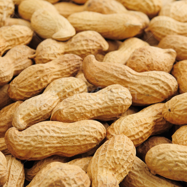 groundnut background Stock photo © serg64