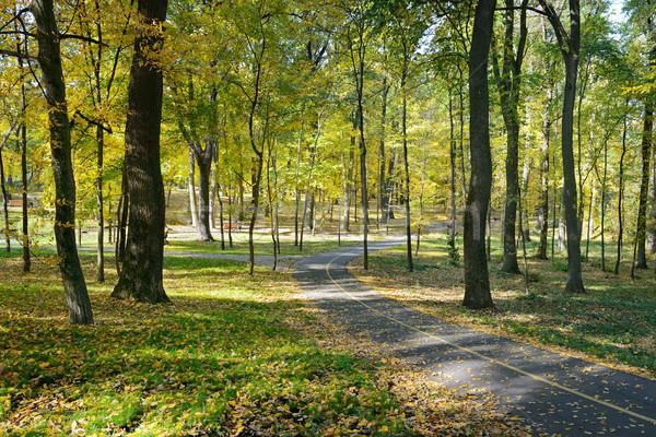 Fallen leaves in autumn park Stock photo © serg64