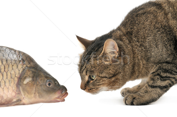 cat and fish Stock photo © Serg64