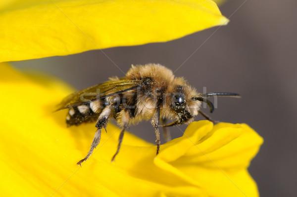 Mel de abelha flor néctar primavera beleza verde Foto stock © Serg64