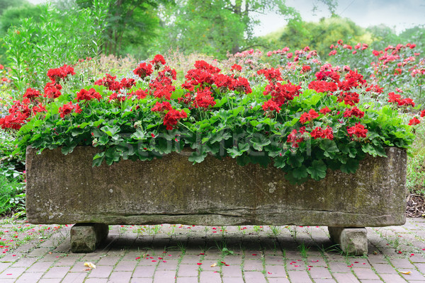 beautiful flowerbed in park  Stock photo © serg64