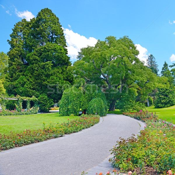 Belo flores árvores parque céu primavera Foto stock © serg64