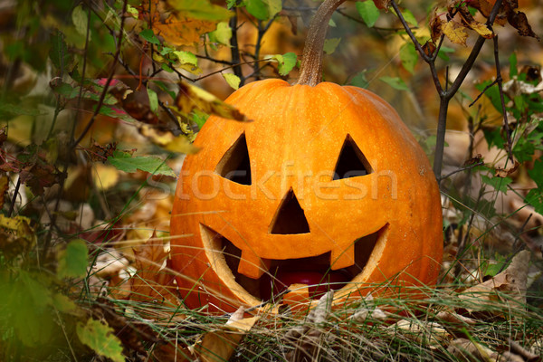 Halloween pumpkin on fallen autumn leaves with smile on his face Stock photo © serg64