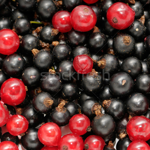red currant and  black currant Stock photo © Serg64
