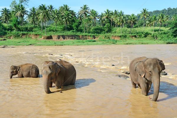 Elefantes rio água natureza viajar Foto stock © serg64