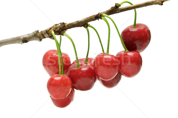 twig sweet cherries Stock photo © Serg64