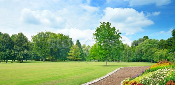 поляна небе весны древесины Сток-фото © serg64