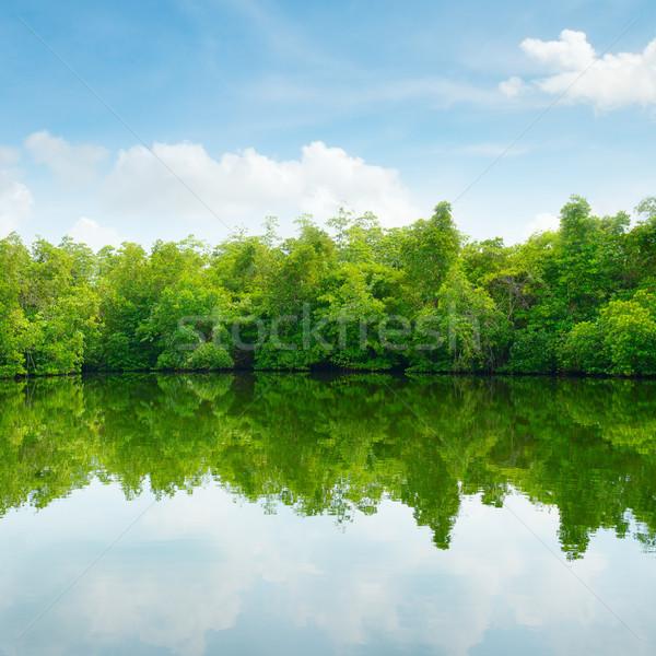 Сток-фото: Blue · Sky · облака · лес · пейзаж · морем · лист