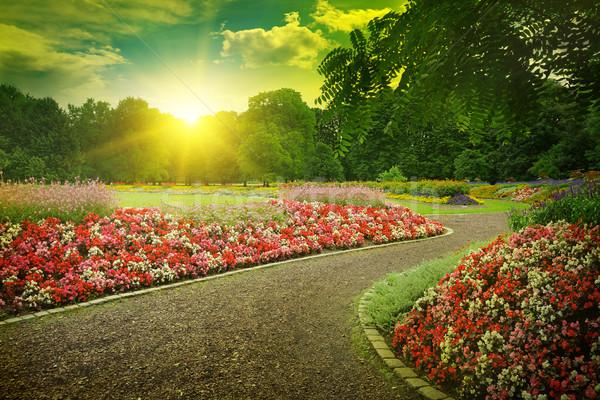 Gün batımı güzel park çiçek orman güneş Stok fotoğraf © serg64