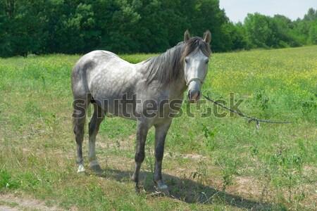 Ev at yeşil alan doğa manzara Stok fotoğraf © Serg64