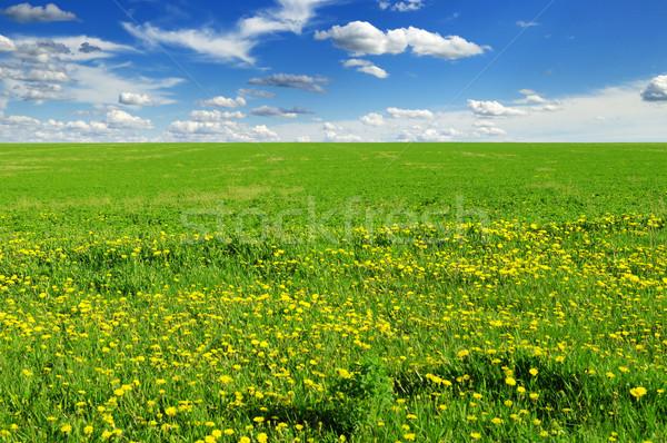 green field Stock photo © Serg64