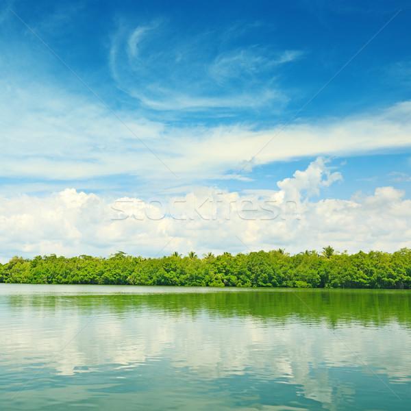 Equatorial mangroves Stock photo © serg64