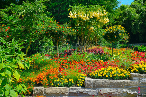 Colorful blooming flower bed at summer park Stock photo © serg64