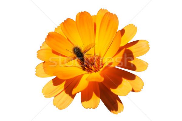 Honingbij bloem nectar voorjaar schoonheid zomer Stockfoto © Serg64