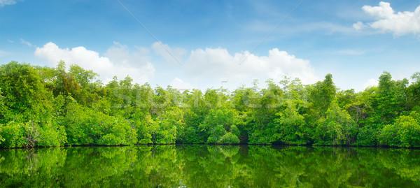 Mangroves and blue sky Stock photo © serg64