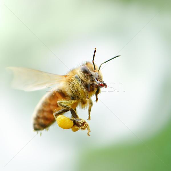 Flying пчелиного меда саду фон лет зеленый Сток-фото © serg64