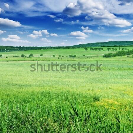 Campo de trigo blue sky céu sol fundo espaço Foto stock © serg64