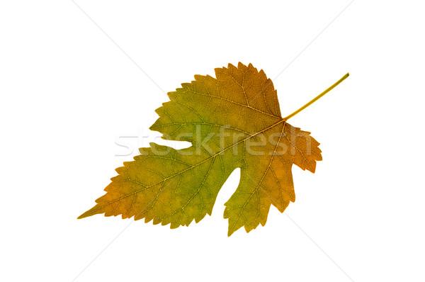 Folha planta textura grama abstrato Foto stock © Serg64