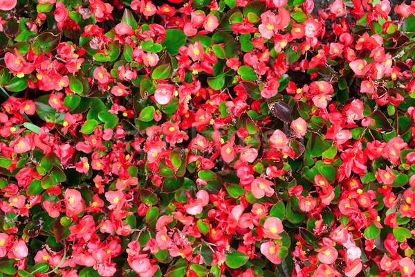 Florescimento primavera grama paisagem folha verão Foto stock © Serg64
