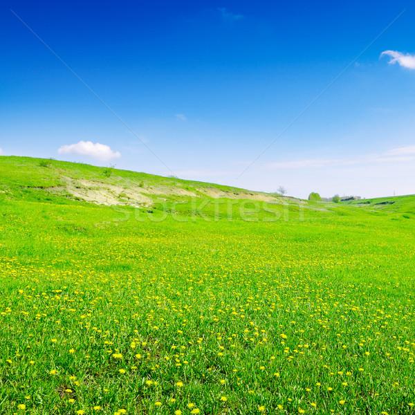 Mavi gökyüzü yeşil alan gökyüzü çiçek bulutlar Stok fotoğraf © serg64