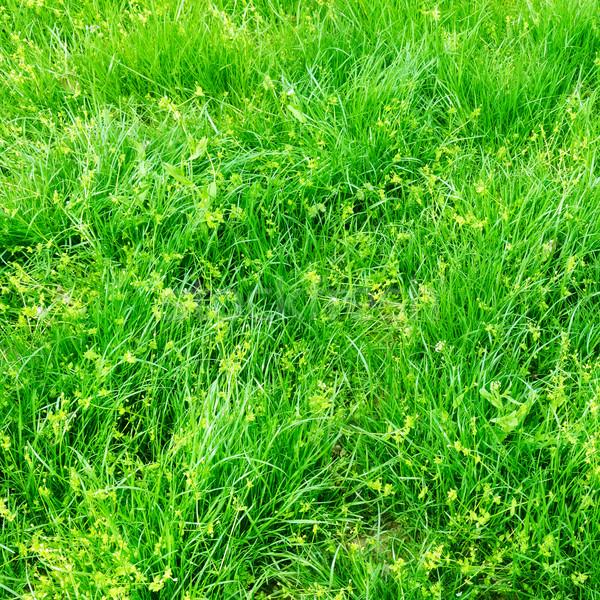 Erba verde primavera campo texture natura foglia Foto d'archivio © Serg64
