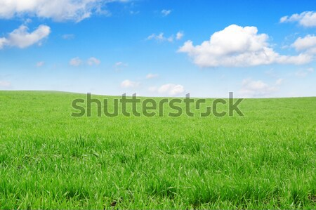 Weide gedekt wolken voorjaar gras zon Stockfoto © Serg64