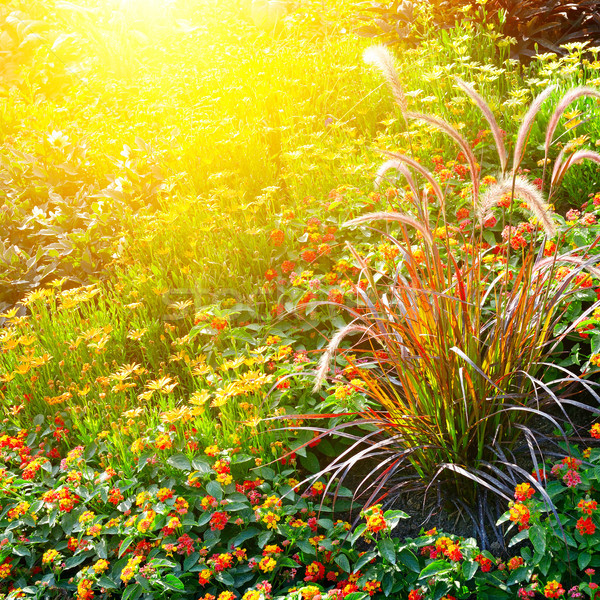 Colorful flower bed illuminated by sunlight Stock photo © serg64