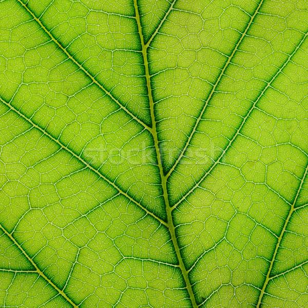 Friss levél növény közelkép tavasz étel Stock fotó © serg64