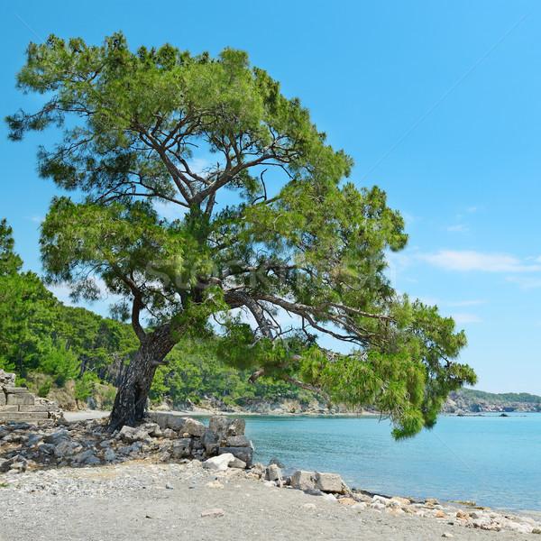 Big beautiful tree on the shore of the bay. Stock photo © serg64