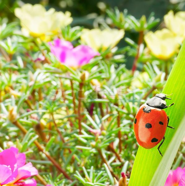 Ladybug лист трава солнце красочный Сток-фото © serg64