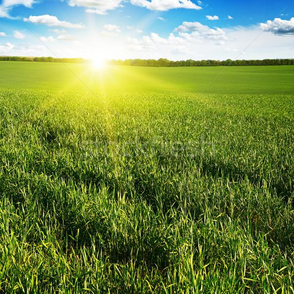 красивой закат зеленый области небе трава Сток-фото © serg64