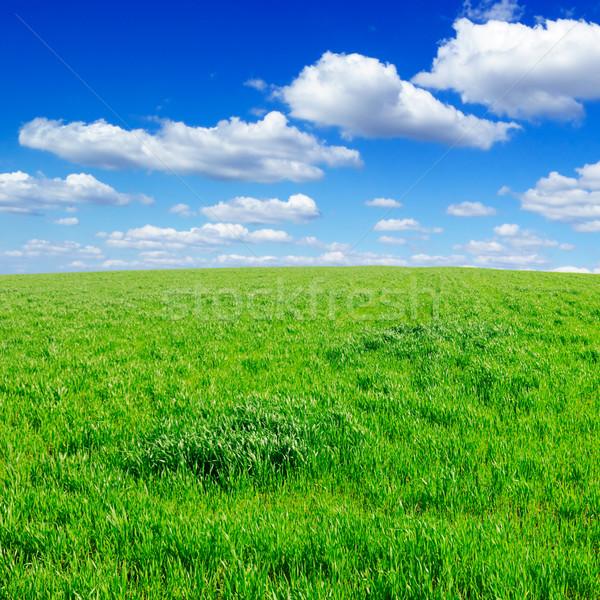 Voorjaar veld groene mooie witte wolken Stockfoto © Serg64