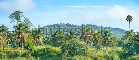 Equatorial forest near the river. Stock photo © serg64